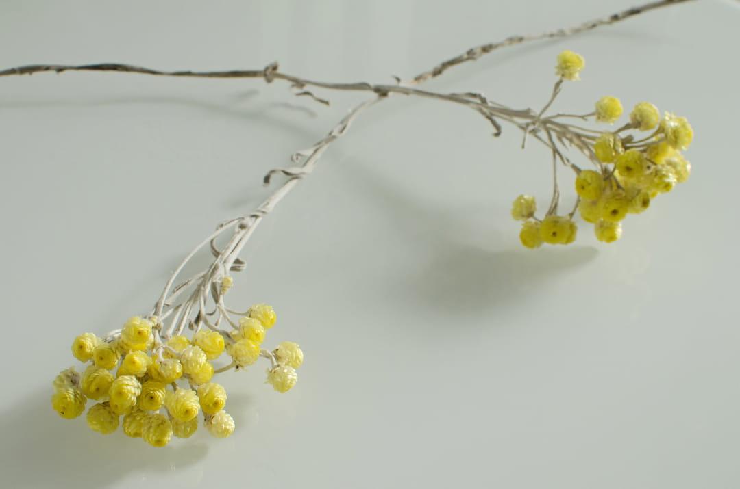 immortelle-fleur-cosmetique