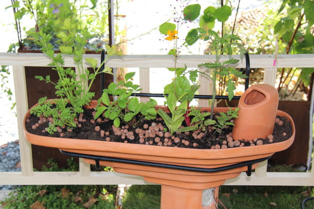 Jardinière L'Herbier