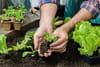 Calendrier du jardin: tous les travaux de jardinage mois par mois