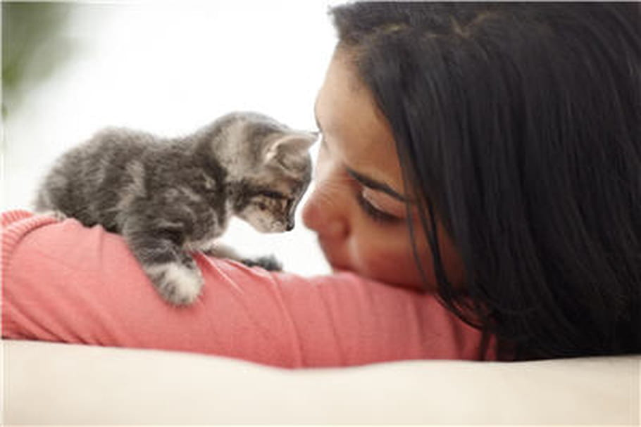 Allergie aux chats: comment s'y adapter?