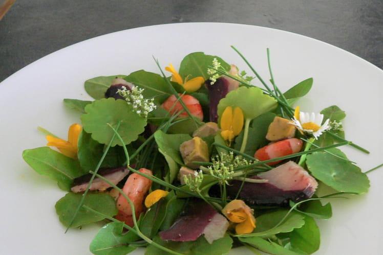 Salade terre-mer aux  jeunes pousses sauvages