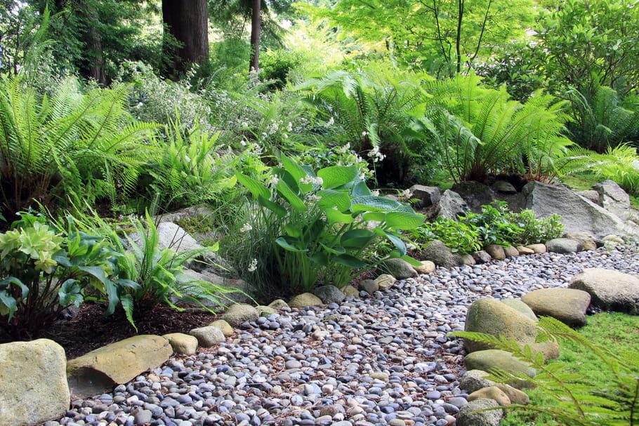4plantes pour un jardin à l'ombre