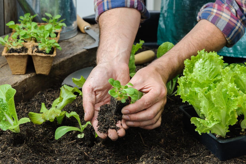 Quel Semis Faire En Septembre calendrier du jardin : tous les travaux de jardinage mois