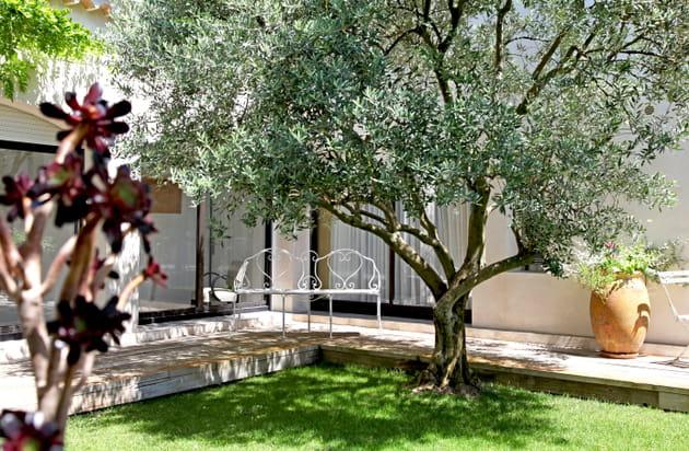 Patio à l'olivier