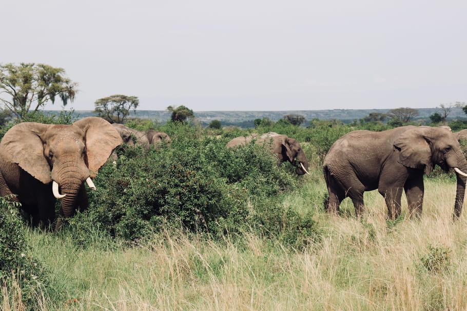 Ouganda: 10choses à voir absolument