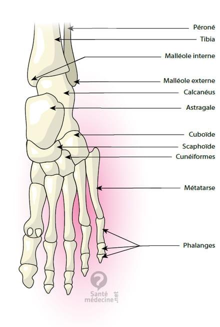 Malléole médiale - Définition - Santé-Médecine