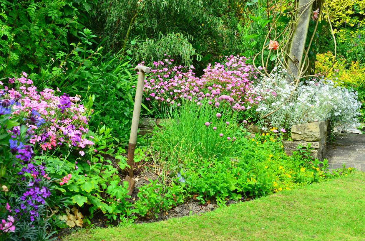 9 Plantes Pour Mixed Border