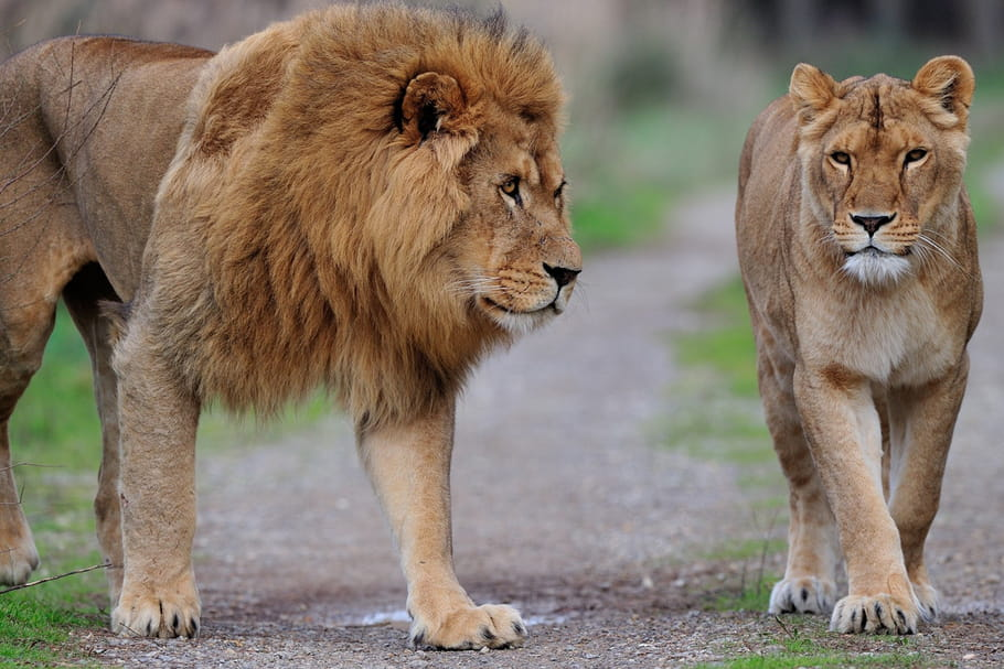 La réserve africaine de Sigean, pour vivre un safari en famille