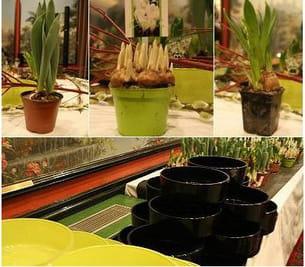 tulipe queens of night, jacinthe blanche, muscari, crocus blanc, narcisse...
