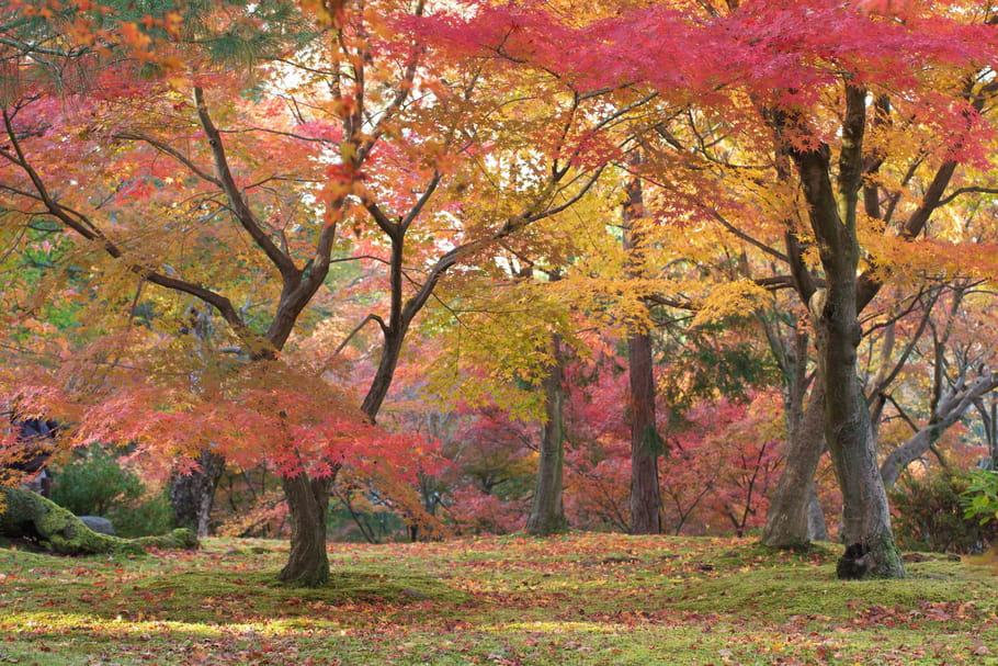 Les travaux d'automne au jardin