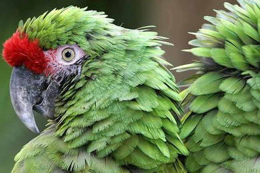 Zoo de La Flèche : descriptif et infos pratiques