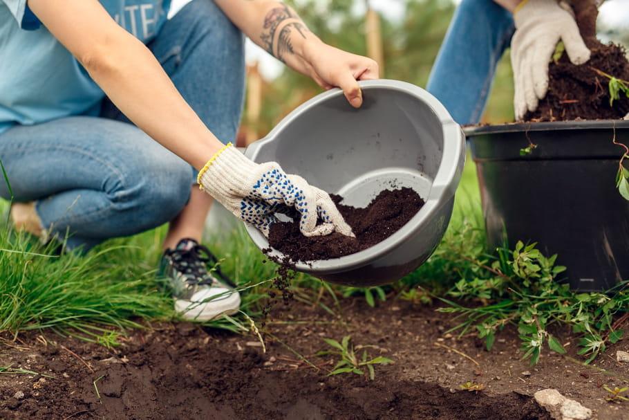 Traitements naturels des végétaux: tout pour un jardin zéro phyto!