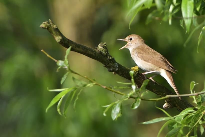 Biodiversité: redonner du sens à son jardin