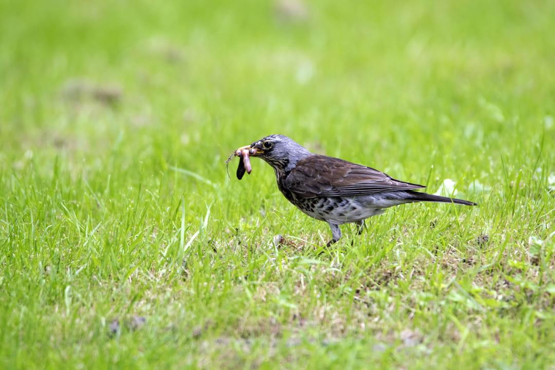 biodiversite-jardin-oiseau