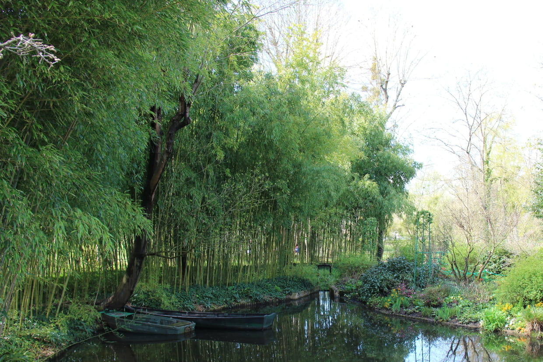 Comment Se Débarrasser Des Bambous Dans Le Jardin bambou : planter, entretenir, tailler et multiplier