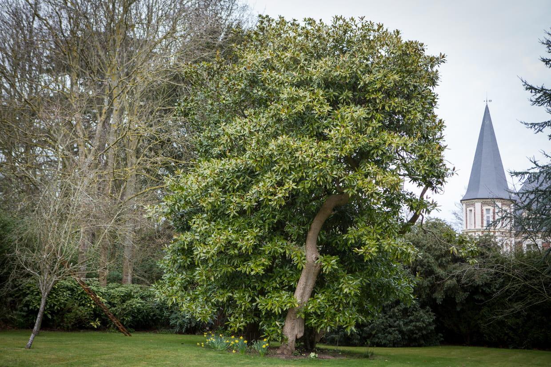 Arbuste Persistant En Pot Plein Soleil quel arbre original planter dans le jardin ?