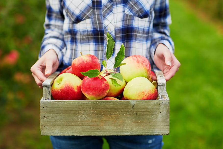 Conserver les fruits après la récolte