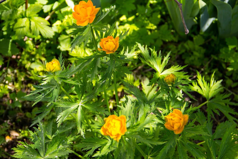 Fleurs Pour Mi Ombre quelles plantes pour une exposition à mi-ombre ?