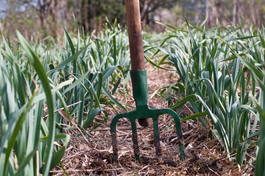 Le paillage au jardin: pourquoi et comment pailler ses végétaux?