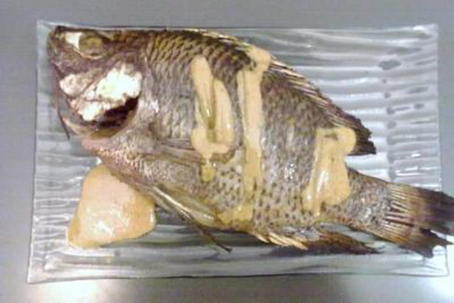 Comment décongeler poisson facilement