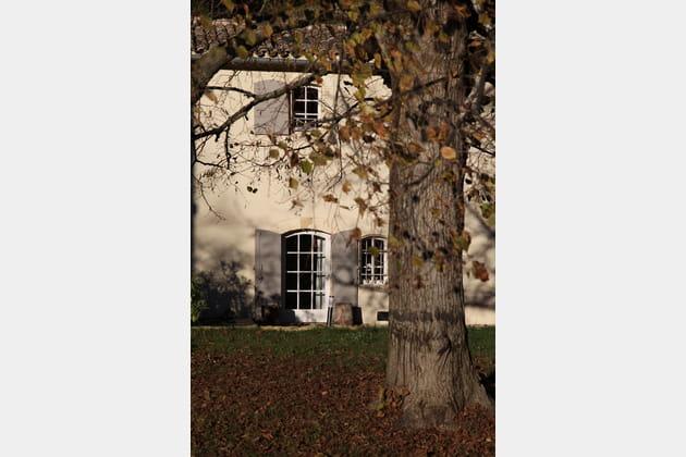 Tapis de feuilles mortes au pied du chêne