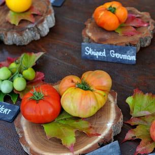 Des vari t s de tomates originales - La bourdaisiere tomates ...