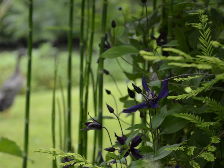 Entretien du jardin for Entretien jardin 16
