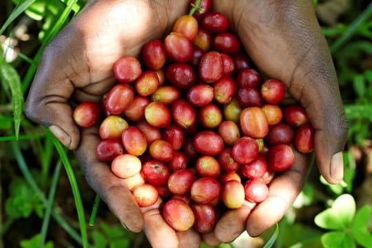 Nespresso : de la bonne graine de café