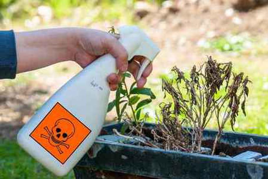 Glyphosate : pas dangereux, vraiment ?