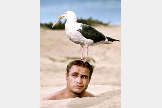Mort Marlon Brando Les séducteurs, 1963