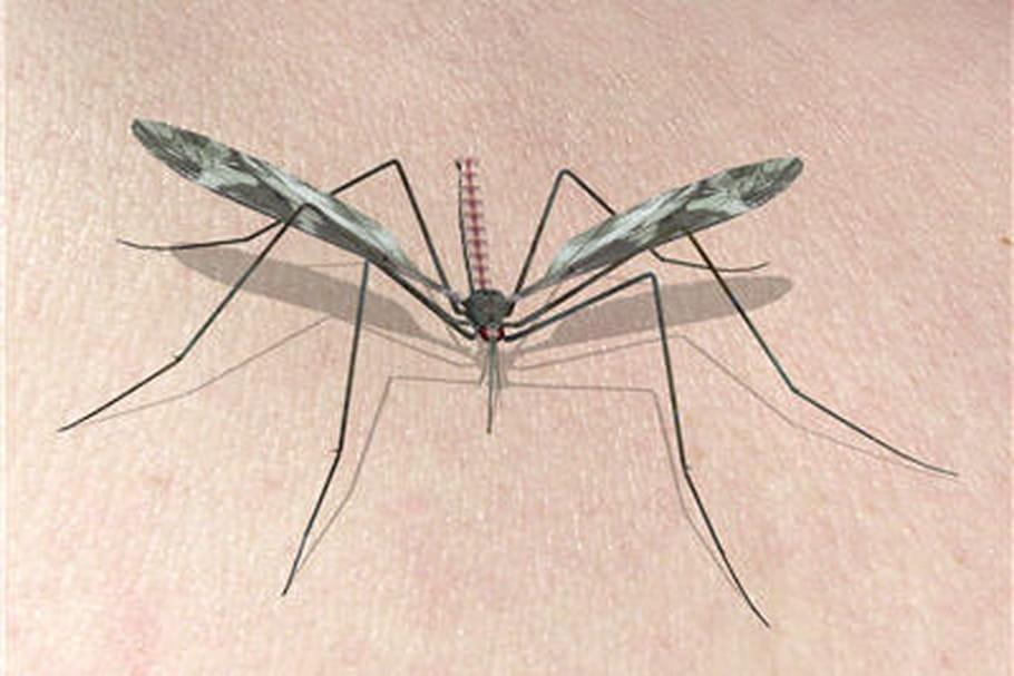 Le paludisme : quand il vaut mieux prévenir que guérir