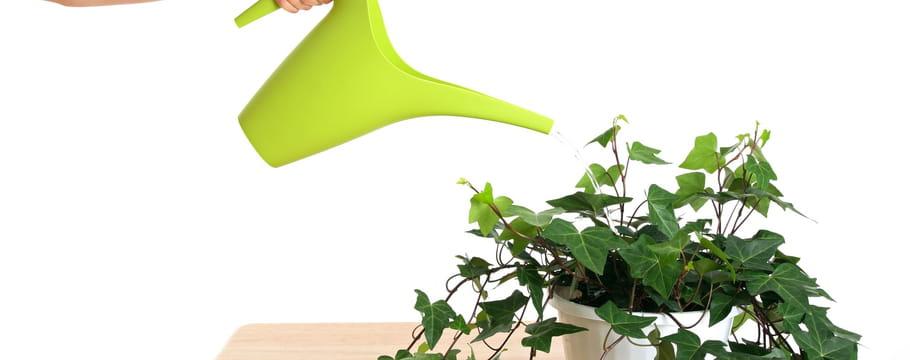 arrosage du jardin les diff rentes techniques. Black Bedroom Furniture Sets. Home Design Ideas