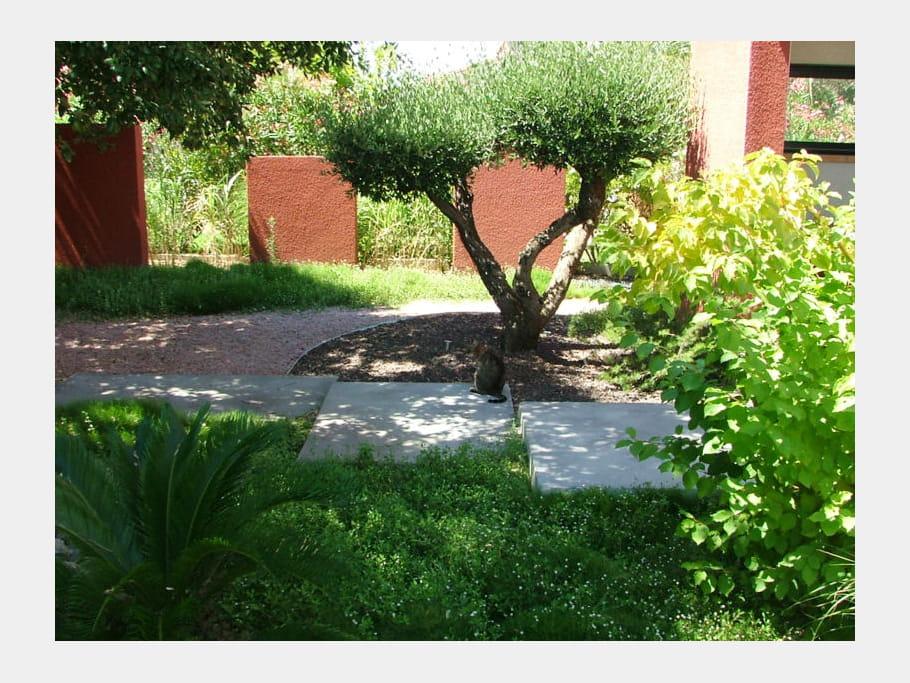 L 39 olivier taill en nuages un jardin japonais quatre ans for Taille olivier en nuage