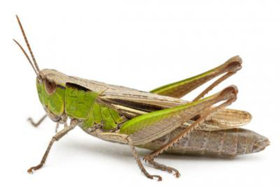 Les insectes comestibles régalent les salariés