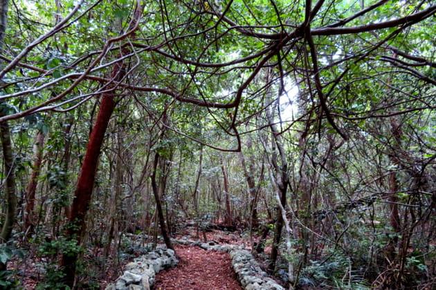 La réserve écologique de Ojos Indigenas