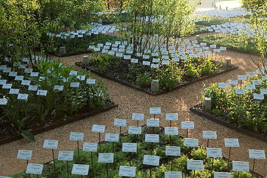 Le jardin des plantes disparues