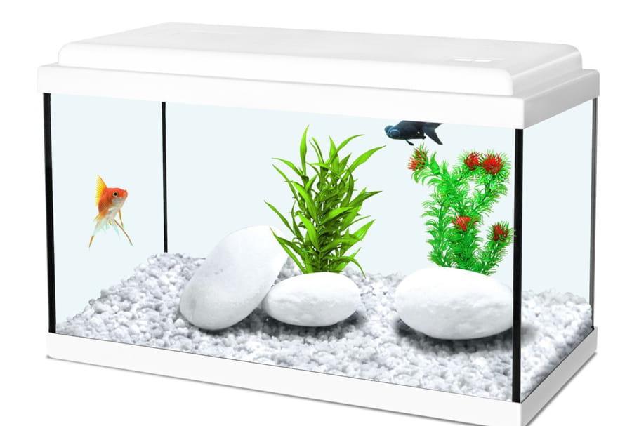Meilleur aquarium: les modèles les plus adaptés à vos poissons