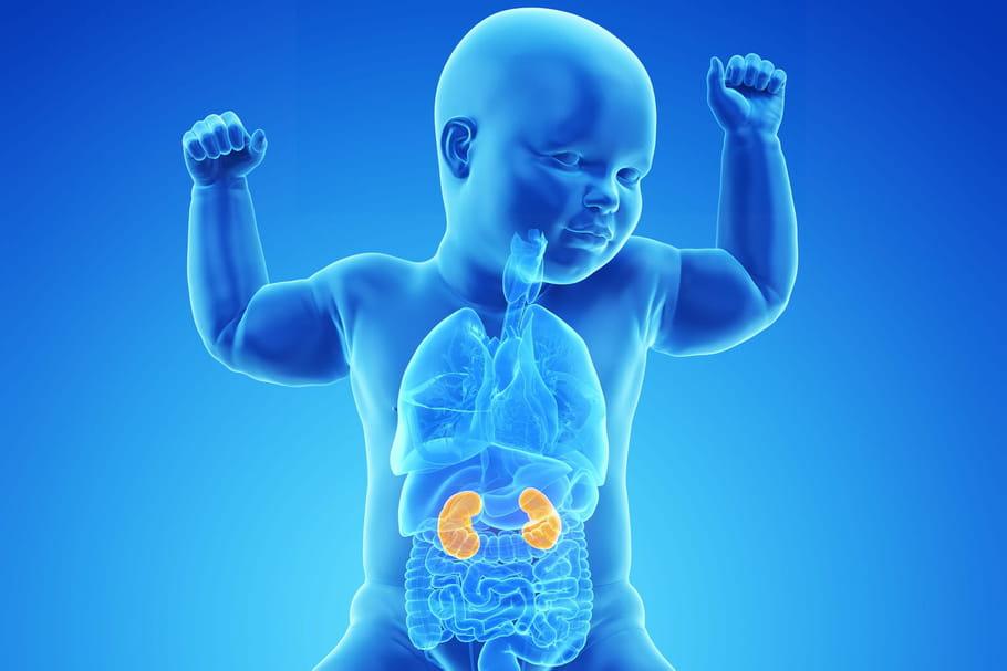 Dilatation pyélocalicielle: causes, quels risques pour le bébé?