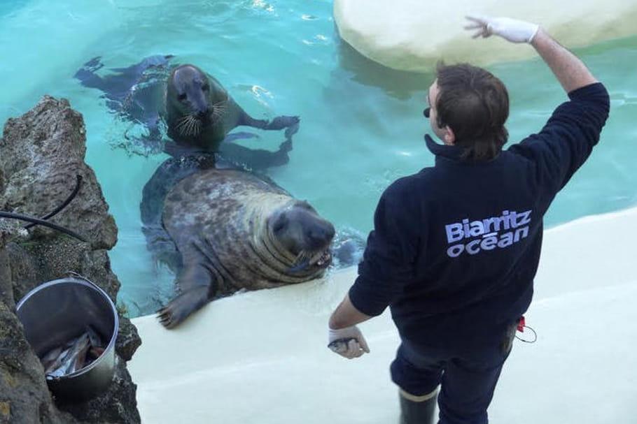 L'Aquarium de Biarritz: toutes les infos pratiques