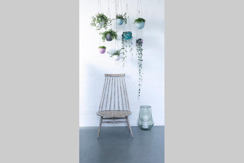 10 plantes d 39 int rieur suspendre. Black Bedroom Furniture Sets. Home Design Ideas