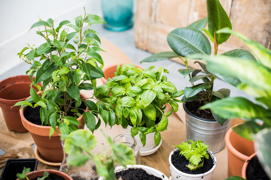 10projets pour s'occuper de ses plantes et de son jardin pendant le confinement