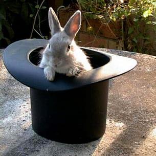 les lapins aiment se placer dans des endroits incongrus...