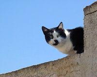 les animaux ont tendance à essayer de s'échapper quand ils sont laissés seuls.
