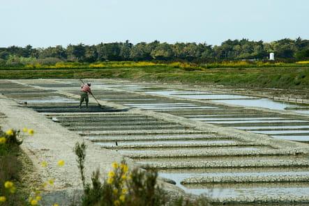 Le sel de l'Ile de Ré