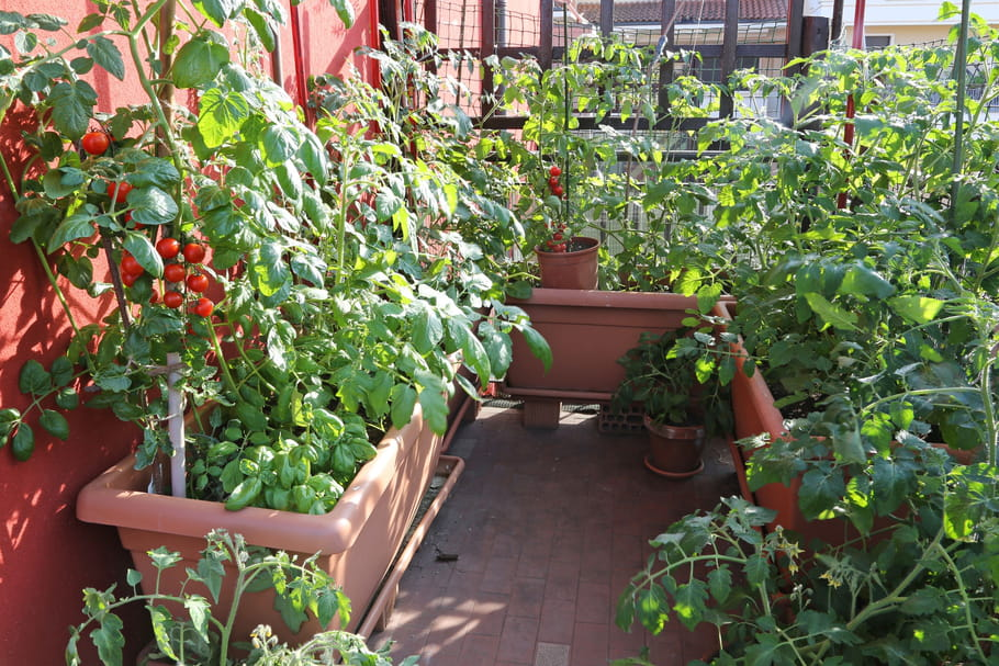 8 Legumes A Cultiver Sur Son Balcon