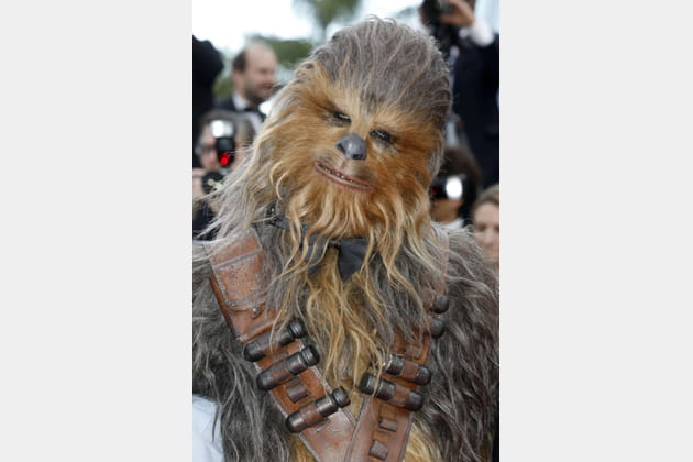 Chewbacca, photogénique