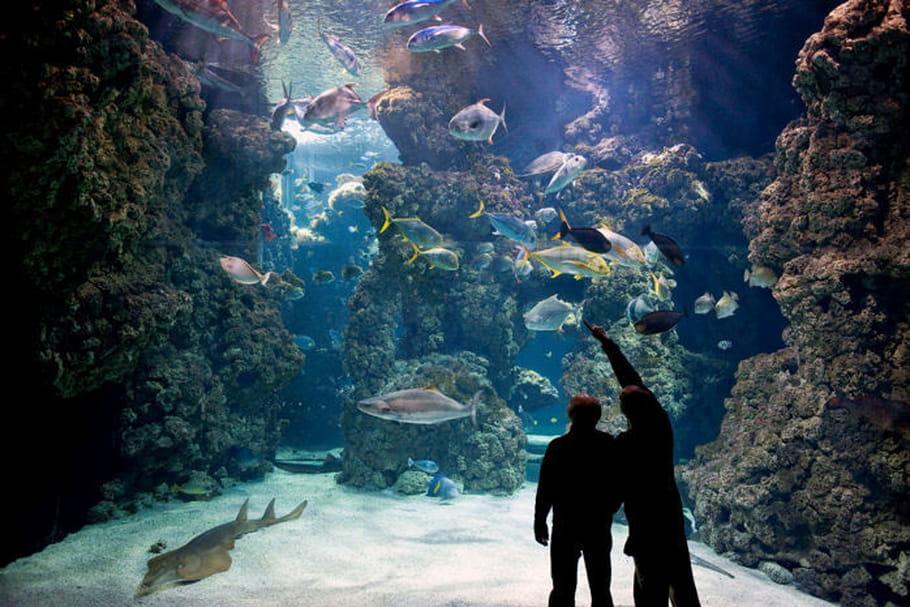 Musée océanographique de Monaco, le temple de la mer