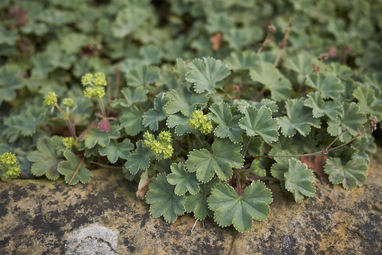 Arbuste Terrain Sec Ombre plante couvre-sol : utilisation et variétés pour l'ombre ou