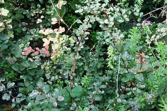 Tr s feuillu comme jardin for Entretien jardin cahors