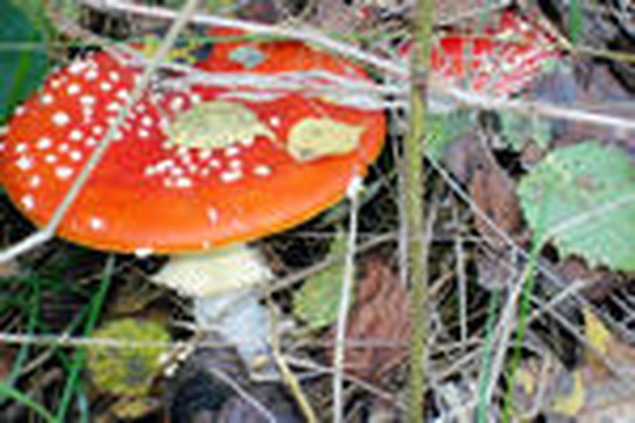 Reconnaître les champignons
